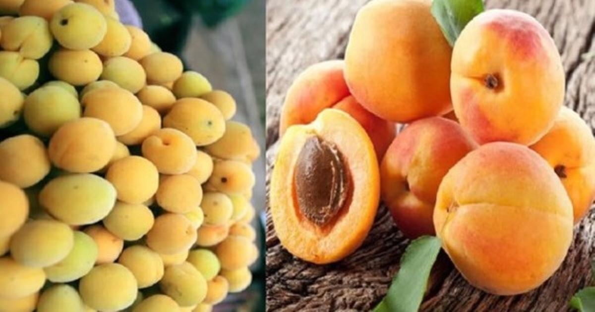 4 loại thực phẩm đầu bảng có thể giúp giảm nguy cơ mắc ung thư