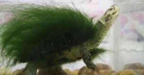 Đi công tác trở về, người đàn ông ngỡ ngàng thấy chú rùa cưng đổi màu xanh lá, đưa đến bác sĩ thú y mới biết sự thật về con vật