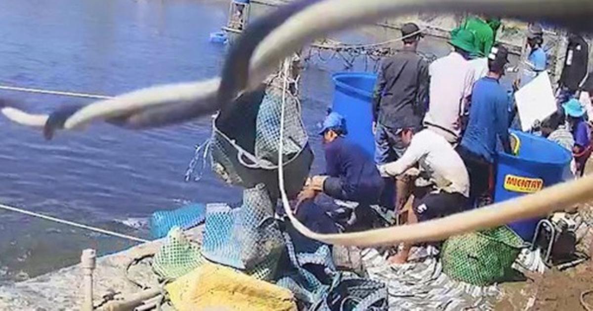 Ba người bị bắt tạm giam trong vụ dàn cảnh trộm tôm