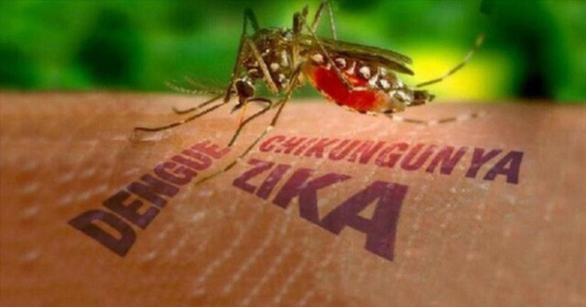 Virus Zika gây nguy hiểm như thế nào khi truyền từ mẹ sang con?