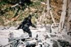 Tìm ra bằng chứng không thể chối cãi về sự tồn tại của quái vật Bigfoot?