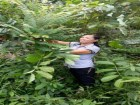 Thầy thuốc mát tay chữa khỏi đau nhức xương khớp nhờ cây rừng