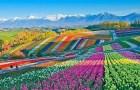 Cùng chiêm ngưỡng vẻ lộng lẫy của những cánh đồng hoa đẹp nhất thế giới