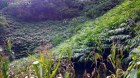 Trồng cây dược liệu mở hướng thoát nghèo từ cây sa nhân
