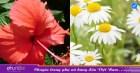 5 loại hoa trong vườn nhà dùng để dưỡng trắng da cực tốt, không phải ai cũng biết