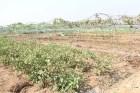 Hàng chục nghìn hecta đất nông nghiệp có thể không đủ nước để sản xuất