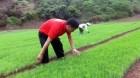 Đề án Phát triển vùng trồng cây Dược liệu giai đoạn 2016-2020 tại Lạng Sơn