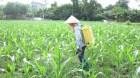 Pháp cấm sử dụng loại thuốc trừ sâu đang được dùng phổ biến