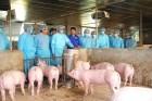 Bộ Nông nghiệp lý giải nguyên nhân dịch tả lợn châu Phi bùng phát tại 20 tỉnh thành