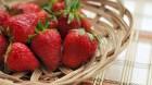 Mô tả được gien quyết định quá trình chín của quả dâu tây