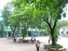 Hà Nội: Thường xuyên kiểm tra, rà soát cây xanh trong trường học