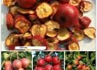 Cách dùng quả táo mèo: Hạ áp, cường tim