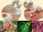 Cần làm gì khi nhiễm khuẩn, nhiễm độc thức ăn?
