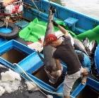 Chuyện làng cá ngừ vang danh Đông Nam Á