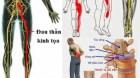 Hỗ trợ trị đau thần kinh tọa, đau dây thần kinh liên sườn theo đông y gia truyền 500 năm