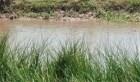 Hai chị em tử vong do đuối nước khi đi bắt ốc