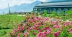 Việt Nam vừa có một thung lũng hoa hồng rộng 50.000 m2 được trao kỷ lục quốc gia, lại có thêm nơi để check-in hè này rồi!