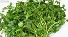 Cây dược liệu cây Cải soong hay Cải xoong, Xà lách xoong - Rorippa nasturtium - aquaticum (L.) Hayek ex Mansf. (Nasturtium officinale R. Br.)