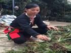 Lương y Triệu Thị Hòa chỉ cách chữa khỏi bệnh đau nhức xương khớp, đau dây thần kinh tọa hiệu quả