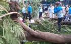 TP.HCM chủ động ứng phó mùa mưa bão