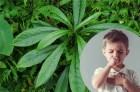 Cách chữa ho cho trẻ bằng lá xương sông mẹ nên bỏ túi