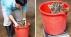 Nhân viên chăm sóc động vật chia sẻ trăm phương ngàn kế hết sức đáng yêu để có thể cân các bé động vật sơ sinh