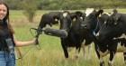 Đàn bò giẫm phải cáp quang, cả trung tâm dữ liệu của Google bị mất kết nối Internet!