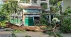 Trách nhiệm thuộc về ai trong vụ tai nạn cây đổ tại trường THCS Bạch Đằng?