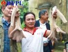 Những cặp nhung hươu lạ, độc đáo, có 1 không 2 ở xứ sở nuôi hươu của Việt Nam