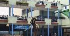 Trường THCS Bạch Đằng đốn bỏ cây phượng còn lại sau vụ tai nạn