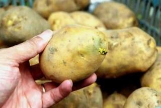5 loại rau củ 'ngậm' đầy độc tố, ăn vào có thể tử vong, lượng nhỏ cũng gây ung thư - Ảnh 1