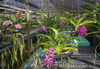 Có nhiều cách trồng hoa lan