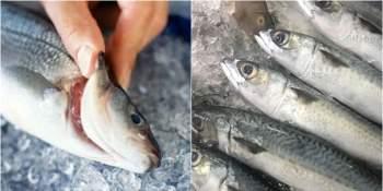 Bí quyết chọn cá để không lo bị nhiễm độc