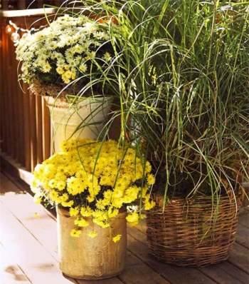 Cần bỏ chút thời gian để chăm sóc hoa tươi tốt