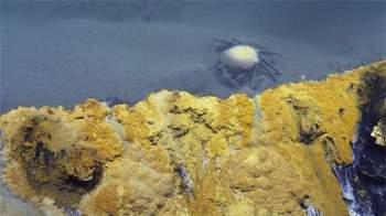 Phát hiện hồ nước 'tử thần' siêu mặn dưới đáy sâu vịnh Mexico - 5