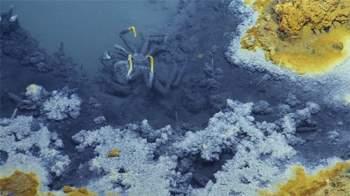 Phát hiện hồ nước 'tử thần' siêu mặn dưới đáy sâu vịnh Mexico - 7