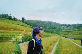 Phụ nữ vùng cao trên những thửa ruộng bậc thang. Ảnh: Mỹ Linh