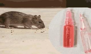 Bé 17 tháng tử vong do ăn nhầm gạo trộn thuốc chuột