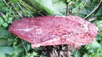 Mỗi loại kiến khi đốt lại đem đến hương vị khác nhau cho món thịt bò. Ví dụ, kiến vống đen đốt sẽ tạo ra mùi hắc. Loại khác đốt lại có mùi thơm, chua. Ảnh: Xeditamdao.