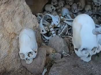Các hộp sọ Paracas bí ẩn.