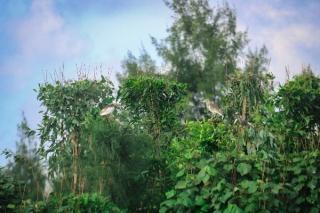 Người dân Hà Tĩnh giăng bẫy bắt chim trời bất chấp lệnh cấm - Ảnh 3.