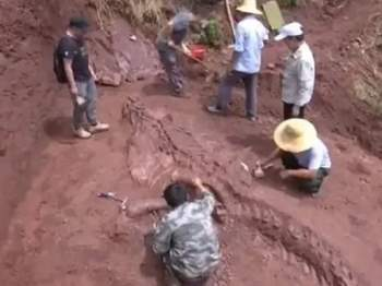 Hình ảnh cho thấy hành vi ấp trứng của khủng long oviraptorids trưởng thành. Ảnh: Global Times.