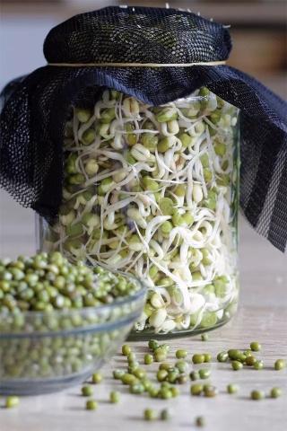 Một số loại thực phẩm biến thành chất độc khi mọc mầm, nhưng có 3 loại thực phẩm lại trở nên bổ dưỡng hơn sau khi nảy mầm - Ảnh 2.