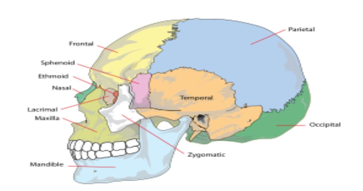 Chức năng 12 đôi dây thần kinh sọ