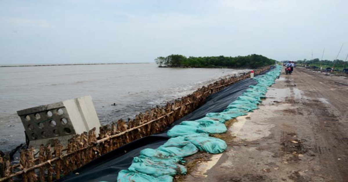 Cà Mau ban bố tình trạng sạt lở khẩn cấp đê biển Tây