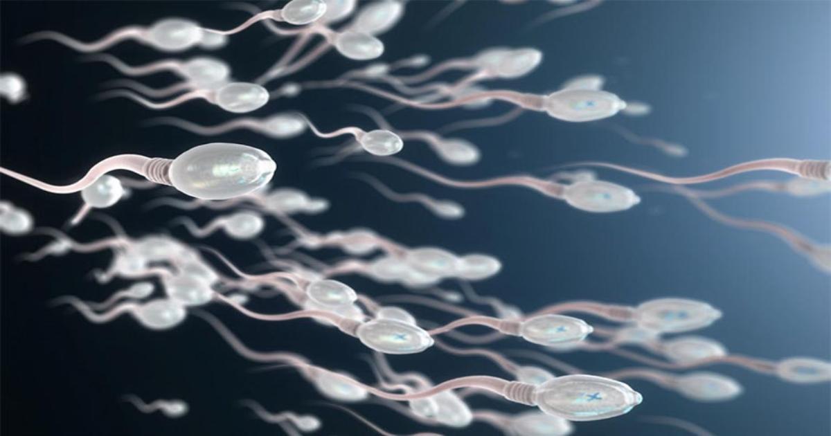 Tinh trùng là gì? Đặc điểm, cấu tạo và thông tin cần biết