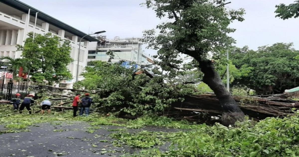 TT-Huế: Chạy về nhà chống bão, chuyên viên phòng GD&ĐT bị cây đè dẫn đến tử vong