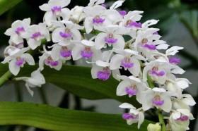 """Cuối năm muốn lộc lá """"tíu tít"""" cứ đặt loại hoa này trên bàn"""