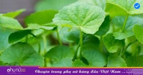 5 loại lá quen thuộc là bài thuốc giải độc gan hiệu quả mà nhiều người không biết