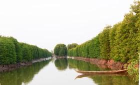 Tái sinh 150 ha rừng ngập mặn tại Vườn Quốc gia Mũi Cà Mau